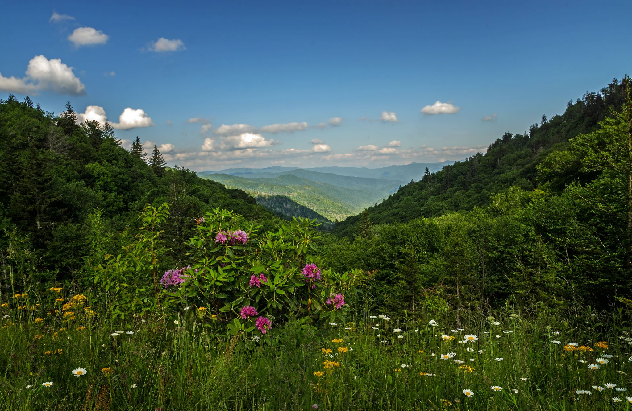 smoky mountains Book your tickets online for the top things to do in great smoky mountains  national park, tennessee on tripadvisor: see 170350 traveler reviews and  photos of.